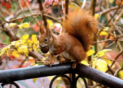 Skipton Community Fund helps protect Jersey's squirrels